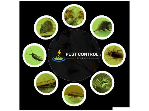 Pest Control Newport