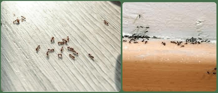 Ant Control Newport