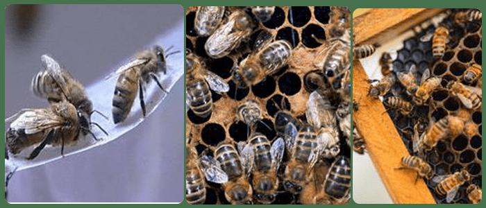 Bees Control Newport
