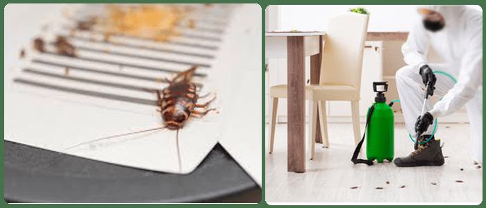Cockroach Control Newport